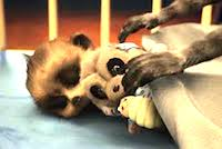 Baby Oleg Baby Oleg & more: Wednesday 12th February 2014